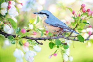 bird-watching-spring-bird
