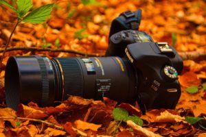 camera-in-leaves