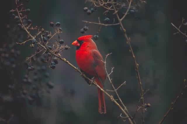 bird-watching-nc