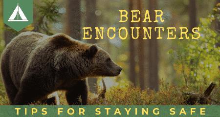 bear encounters avoid bear attacks