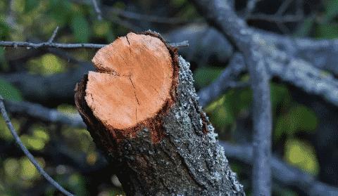 cut branch folding saw