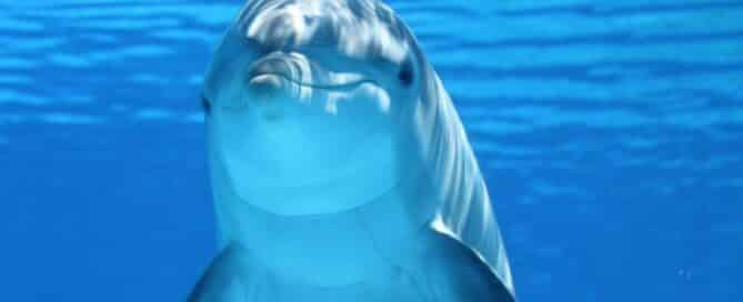 bottlenose-dolphin-close-up