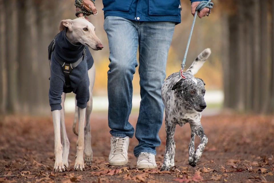 Leash dogs