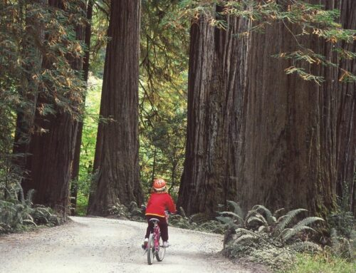 Redwood National and State Parks are hosting 'Hike and Bike' days