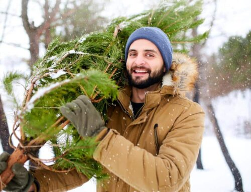 250 Christmas tree cutting permits at Golden Gate Canyon State Park
