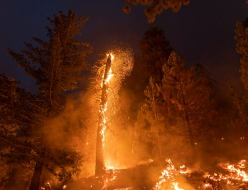 Wildfire breaks out at Itasca State Park